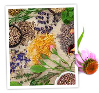 herbs-and-flower